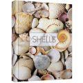Книга А4 96л Малюнки природи Shells